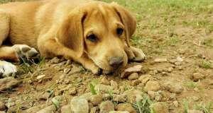 怎么改变狗狗吃土的坏习惯?