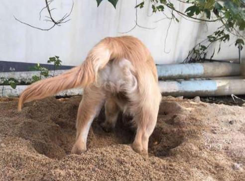 狗狗吃土怎么办?